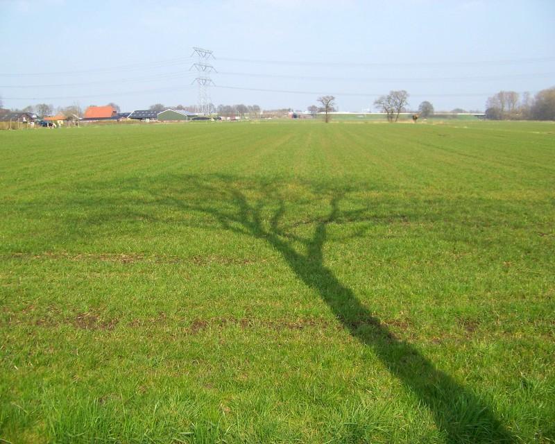 Boom in het gras